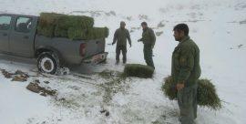 علوفهرسانی به حیات وحش خواف در برف و سرما