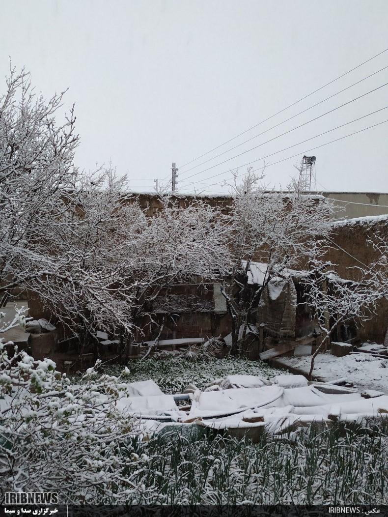 جلوه هایی از بارش برف در خواف