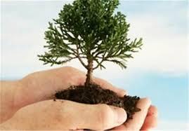 همزمان با ۱۵ اسفند ماه : جشن روز درختکاری در شهرستان خواف برگزار شد