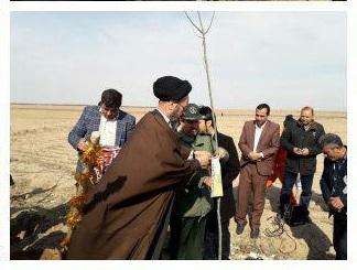 غرص ۱۱۲ اصله نهال در شهر سلامی