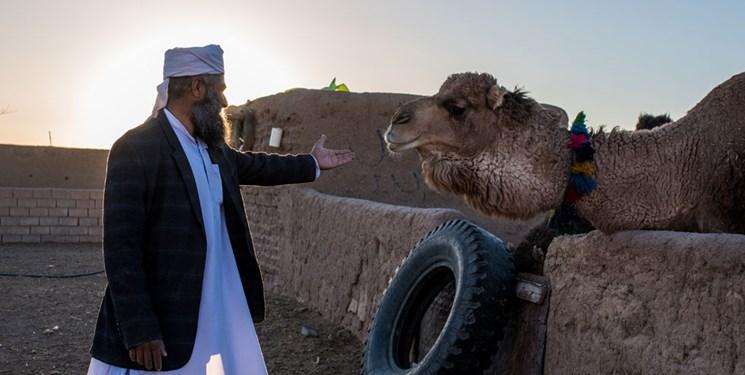 روحانی اهل سنت که «ساربان شترهای بیمرتع» در کال شور شد+تصاویر